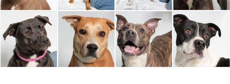adoptable dogs near me pet adoption near me pets world