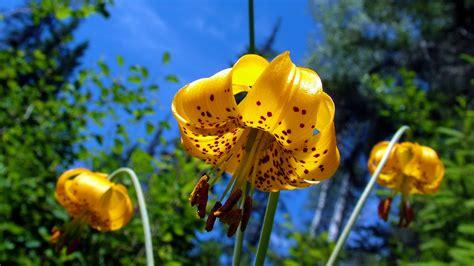 desktop gratis fiori sfondi hd natura wallpapers fiori sfondi hd gratis