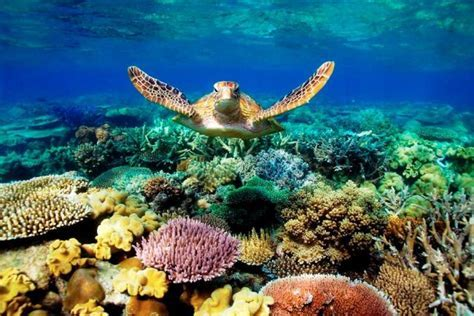 Threats To The Great Barrier Reef   Green Mom.com