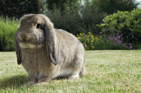 breed lifespan spans of different rabbit breeds you must