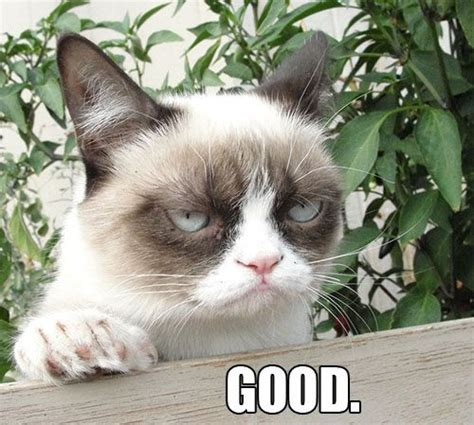 Angry Cat Good Meme - 17 best images about grumpy cat on pinterest i like you