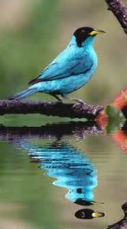 nature white möbel bel oiseau bleu turquoise 224 t 234 te