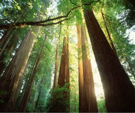 Redwood Lighting by Carpenter