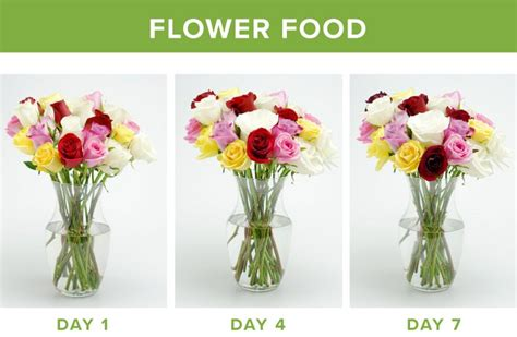 how to make flower food how to make flowers last longer 9 tricks proflowers