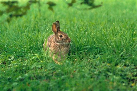 backyard rabbit backyard pest protection keep pest out of yard houselogic