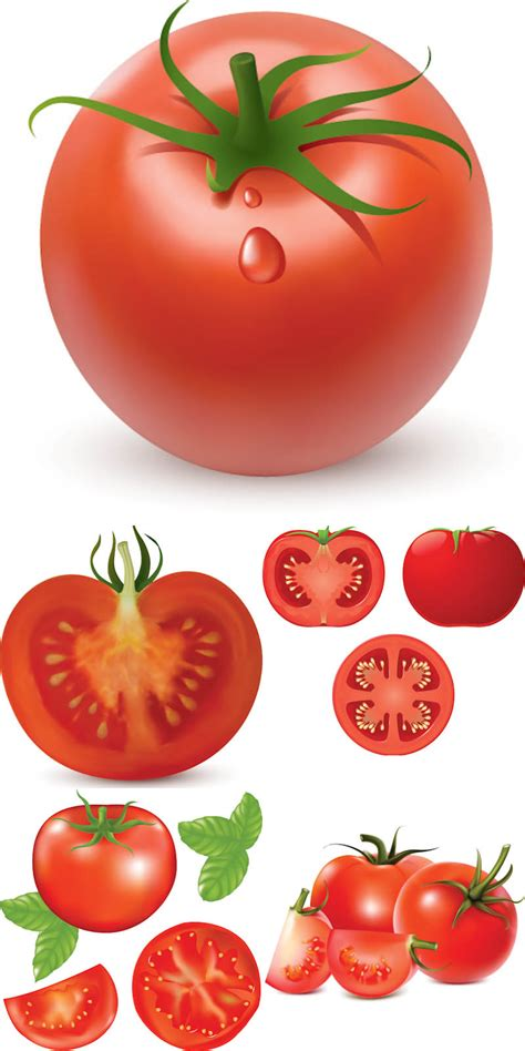 tomato illustrations vector  stock vector art