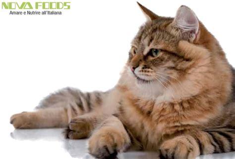alimenti per animali torino alimenti per gatto torino il pellicano piossasco