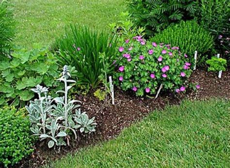 herb garden plants kinds of herb garden plants beautyzoomin