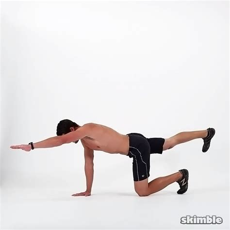 bird exercise to knee bird dogs exercise how to workout trainer by skimble