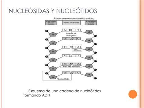 cadena de adn de 15 nucleotidos acidos nucleicos