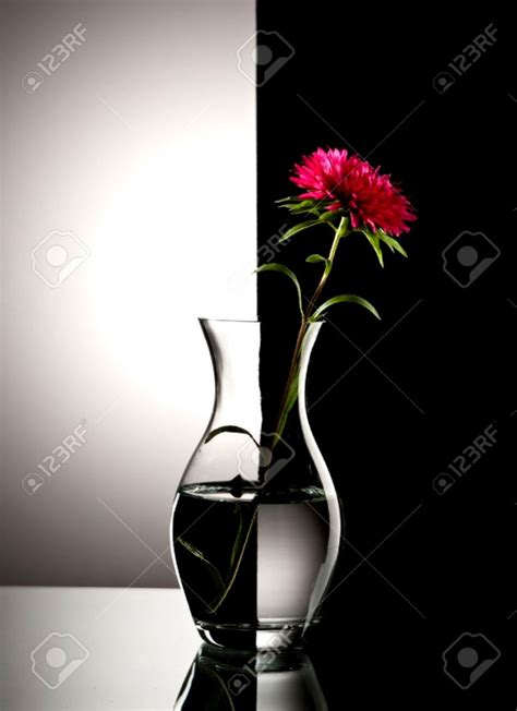 Black And White Flower Vase Flower Black And White Background Wallpapers Gallery