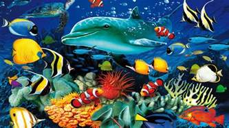 ocean underwater marine dolphin sea turtle colorful tropical fish coral wallpaper