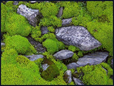 pentax 645 velvia 50 rocks and moss