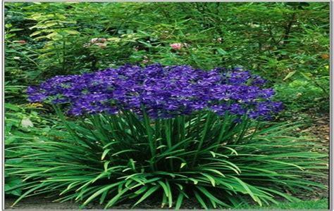 pin flowers perennials that bloom all summer flowering