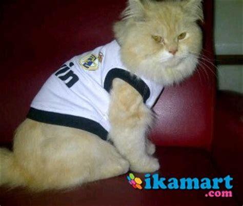 Jual Baju Untuk Kucing | jual baju kucing bola baju anak