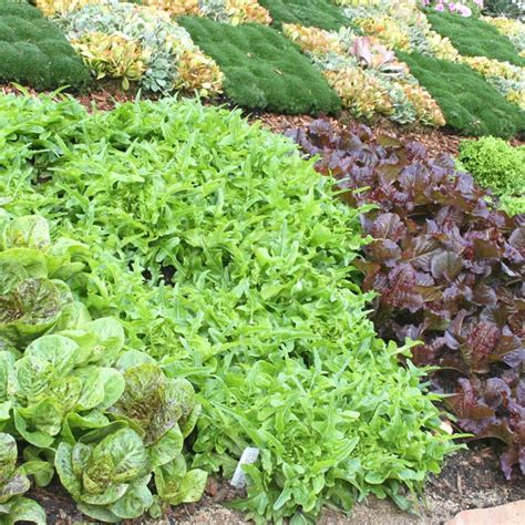 Southern California Gardening Fine Fall Vegetables Winter Vegetable Garden Southern California
