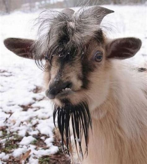 retarded dog blank template imgflip retarded goat blank template imgflip