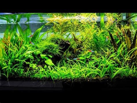 aquascape how to how to aquascape a low tech planted aquarium part 1
