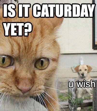 Caturday Meme - cat macros cat macros page 26