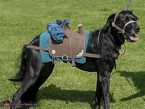 sheriff   horse dogs costume photo