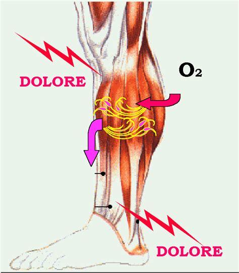 muscolo sedere muscoli intercostali