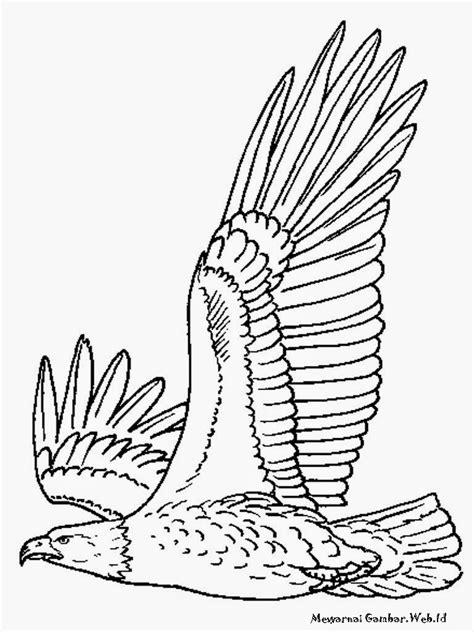 Mewarnai Gambar Burung Elang | Mewarnai Gambar