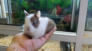 increibles conejos enanos animalia vigo