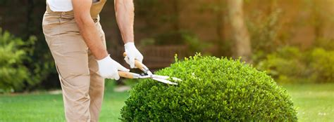 quanto guadagna un giardiniere come diventare giardiniere professionista trovami