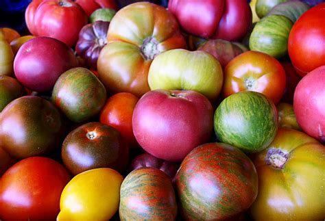 Tomat Multi Color in celebration of heirloom tomatoes beautiful on