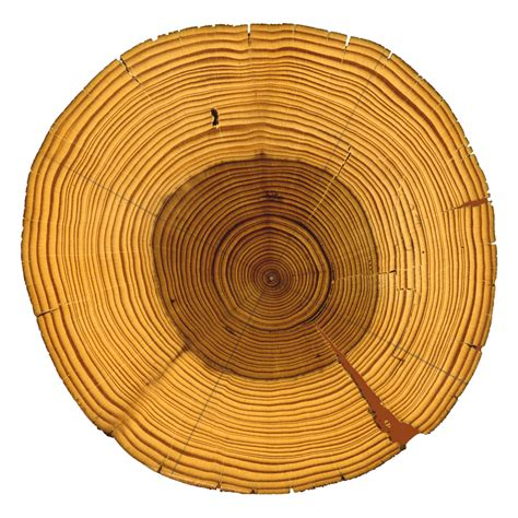 tree ring treering
