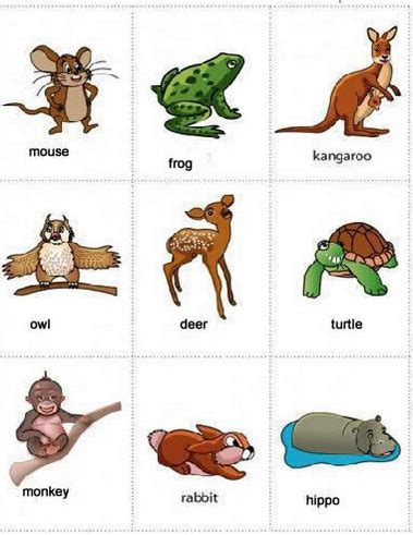 nama hewan  bahasa inggris  bahasa inggris