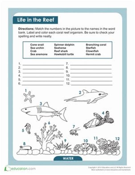 Coral Reef Worksheets For by 25 Best Ideas About Coral Reef Biome On Coral