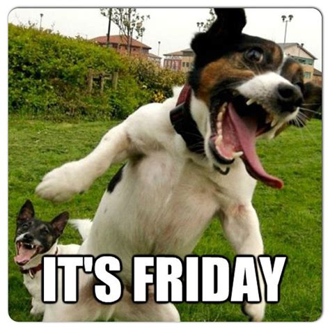 Weekend Dog Meme - meme funny weekend tgif on instagram