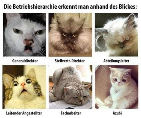 Katzen Meme - lustige katzen lustiges pinterest