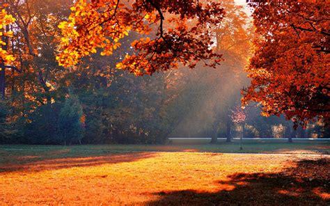 Lu Taman Sinar Matahari musim gugur taman sinar matahari hd wallpaper desktop
