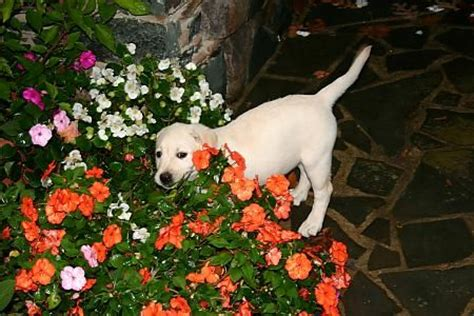 dog friendly backyard ground cover 1000 ideas about dog friendly backyard on pinterest dog