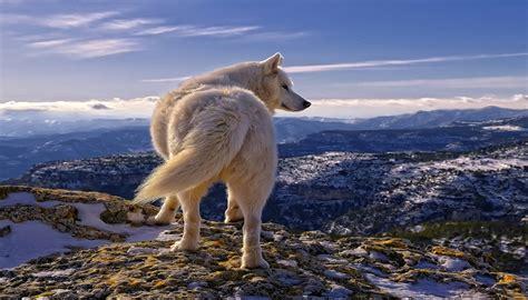 imagenes de paisajes y animales hermosos te encantara estos magnificos paisajes hermosos con