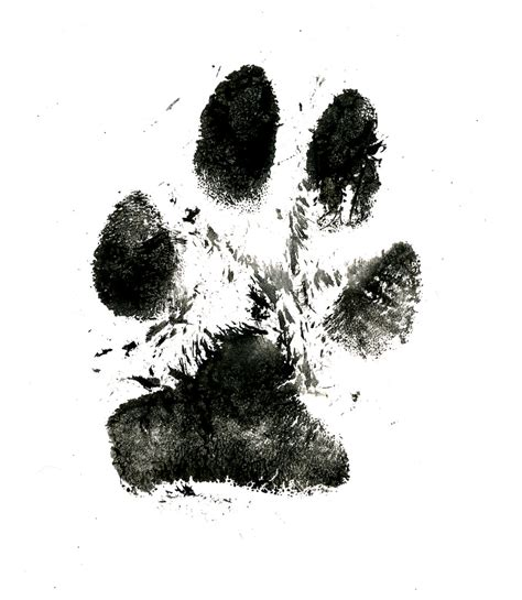 zephyr s paw this was a trial poor guy couldn t figure