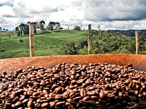 coffee plantation wallpaper how coffee farmers are making a move with clouddataquest