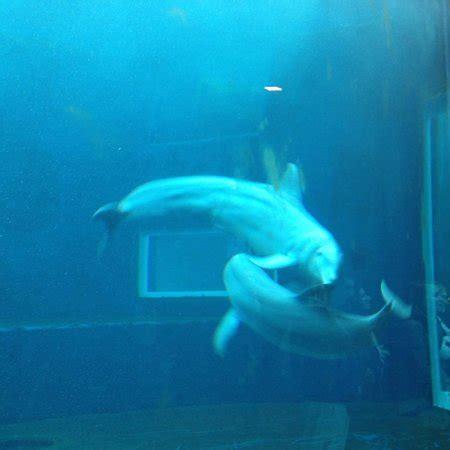 ingresso acquario di genova groupon giochi d acqua foto di acquario di genova genova