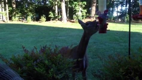 Backyard Hilarious Wins Fails Archives Just For