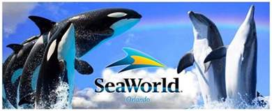 Sea World Shamu Goes Out With The Tide Seaworld Ceo On Its Abrupt