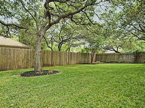 best shade trees backyard