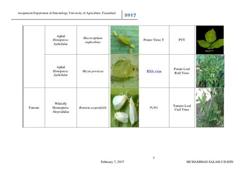 plant viral diseases list list of insect vector transmitted plant diseases terminology