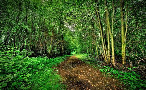imagenes originales de naturaleza naturaleza hermosa del bosque descarga im 225 genes de alta
