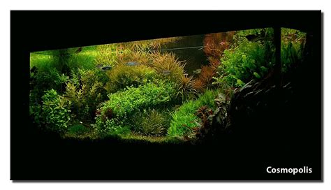 aquascape of the month april 2008 quot cosmopolis