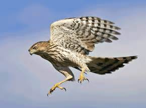 birds of prey december 2013