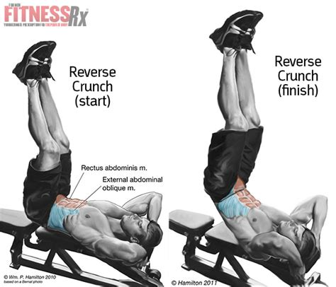 incline bench reverse crunches reverse crunch anatomy bodybuilding enhance latest