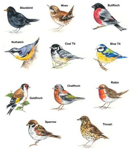 bird breeds bird select type size waterslide ceramic decals bx ebay