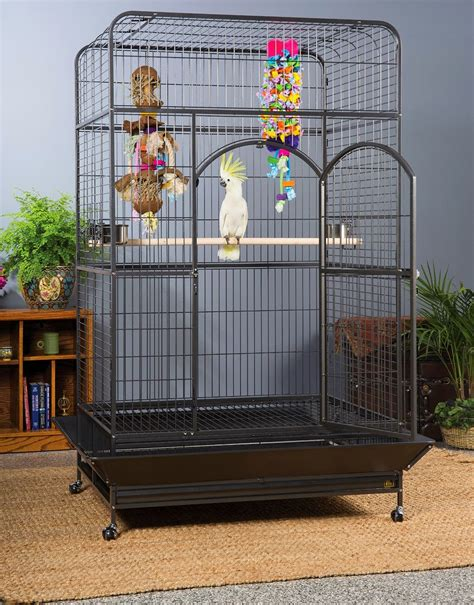 large bird cages large bird cage setup ideas spiffy pet products